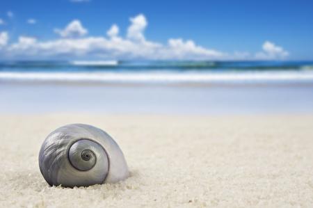 a Beautiful perfectly shaped seashell on the beach photo