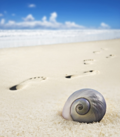 Seashell and foot prints on a sandy beach Stock Photo