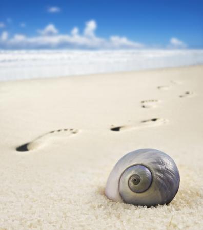 huellas de pies: Seashell huellas en una playa de arena Foto de archivo