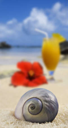 Beautiful seashell on a tropical island beach with fruit cocktail in background photo