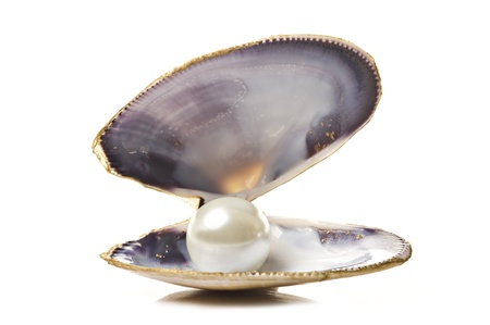 scallop shell: One white pearl in a sea shell on white background Stock Photo