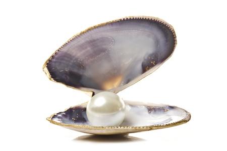 petoncle: Une perle blanche dans une coquille de mer sur fond blanc Banque d'images