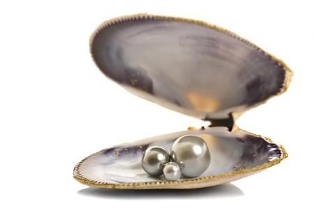 ostra: Hermosas perlas en un shell en fondo blanco puro