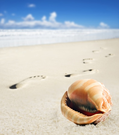Sea shell and foot prints on a sandy beach photo