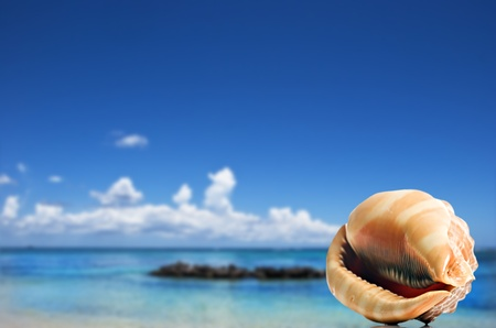 a Beautiful perfectly shaped sea shell on the beach photo
