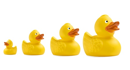 ducks water: Yellow toy ducklings om a row on white background Stock Photo