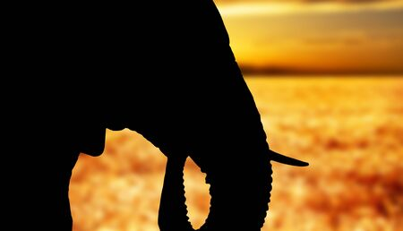 Silhouette of the head of an African elephant photo