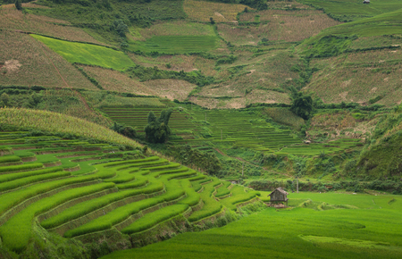 Beautiful landscape rice terrace view in mu cang chai , yen bai , Vietnam