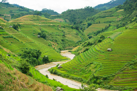 Beautiful landscape Green Terraced Rice Field in Vietnam