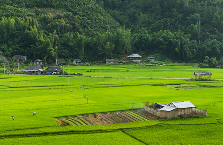 Rice field terraces and farm houses in northern Vietnam Stock Photo