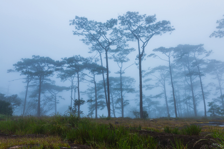 morning mist in forest before sunrise. Bolaven plateau, Southern of LAOS Stock Photo