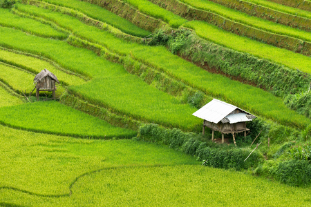 Beautiful landscape Green Terraced Rice Field with  in Mu cang chai, Vietnam
