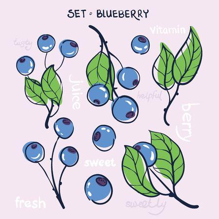 illustratie van een set van bijkantoren bosbessen fruit en bladeren op een lichte achtergrond met de woorden