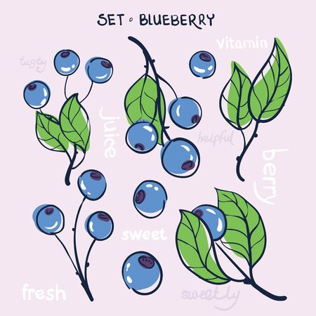 blue berry: illustration, a set of branches blueberry fruit and leaves on a light background with the words