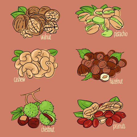 cashews: vector illustration set with different types of nuts Illustration