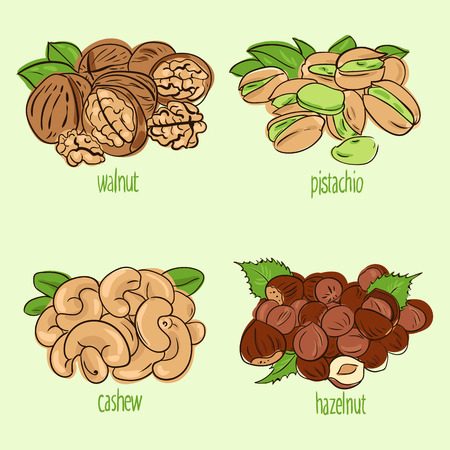 filberts: vector illustration set with different types of nuts Illustration