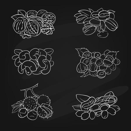 vector illustration set with different types of nuts on the chalk board Illustration