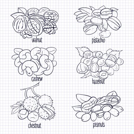 vector illustration set with different types of nuts sketch on paper