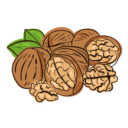 hard crust: vector illustration of walnuts in doodle style Illustration