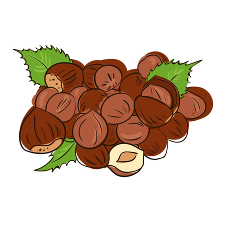 filberts: Hazelnuts with leaves. Photo-realistic vector illustration.