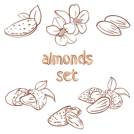 vector set of almond nuts and flower in different forms