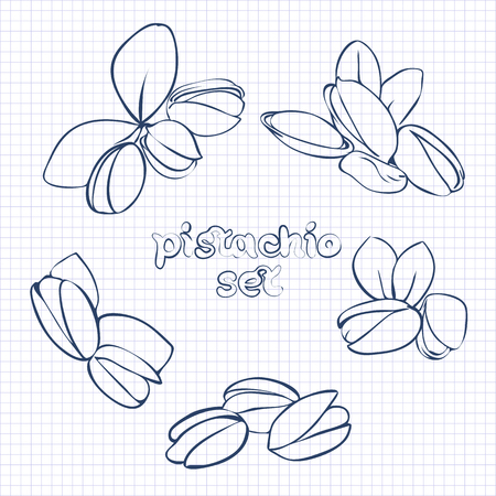 pistachio: vector set of pistachio nuts in different forms on a piece of paper