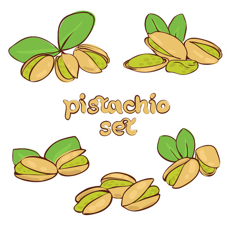 pistachio: vector set of pistachio nuts in different forms Illustration