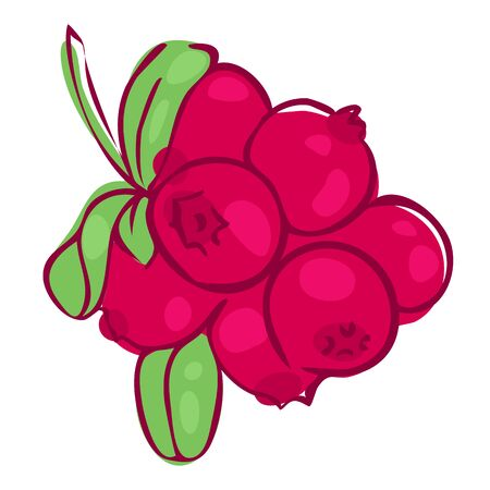 cowberry: vector illustration in doodle style, picture of berries cowberries with leaves