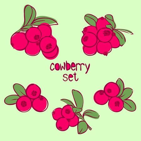 cowberry: vector illustration in doodle style, set of berries cowberries with leaves in different forms