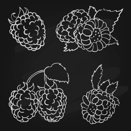 dainty: vector illustration in doodle style, set of berries raspberry with leaves in different forms drawn on the chalk board