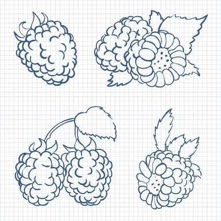 dainty: vector illustration in doodle style, set of berries raspberry with leaves in different forms drawn on a sheet of paper