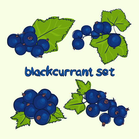 vector set of black currant in different forms in doodle style