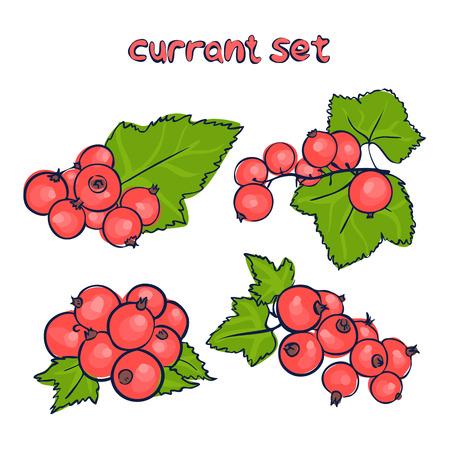 vector set of red currant in different forms in doodle style