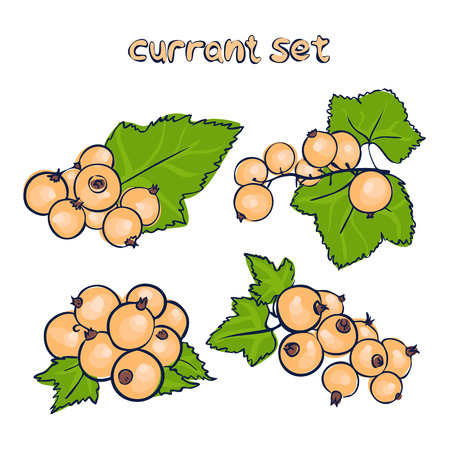 vector set of white currant in different forms in doodle style
