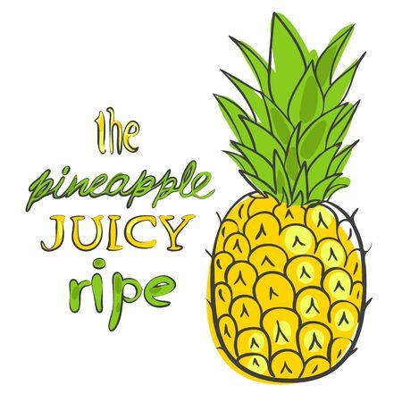 ripe:  illustration ripe juicy pineapple style doodle art