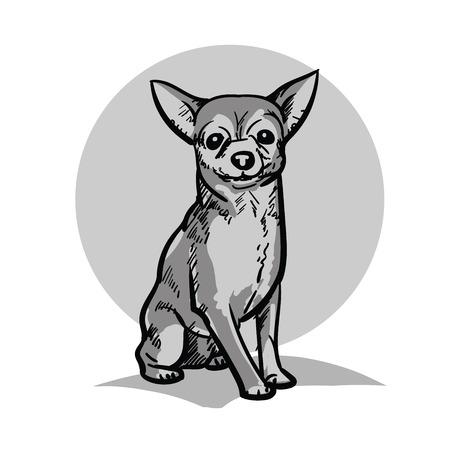 Chihuahua. A small dog.