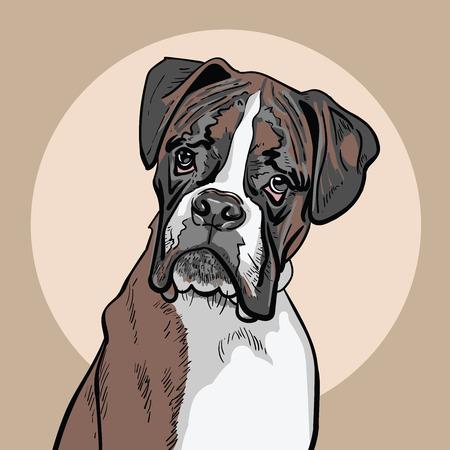 Dog boxer. Illustration.  イラスト・ベクター素材
