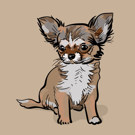 Little Chihuahua Dog. Puppy