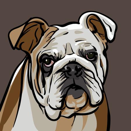 Illustrazione piana di vettore del bulldog su fondo marrone.