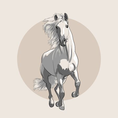 Horse in motion with a mane. Hand sketch.