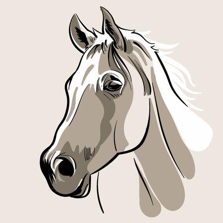 Horse head. Hand drawn vector illustration. Ilustração