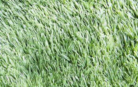 Green grass pattern photo