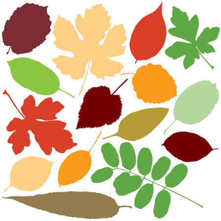 beech: Collection of leaf silhouettes   Illustration