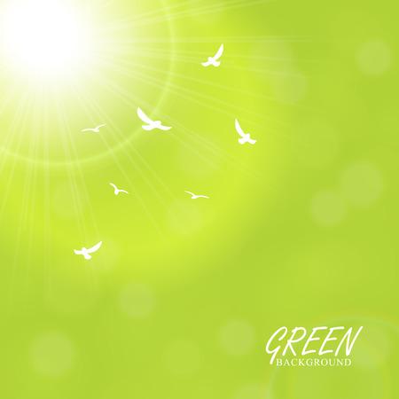 Green sunny rays background, bird illustration. Vector