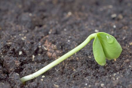 Green seedling with two leaves growing in the ground Stock Photo - 4856073