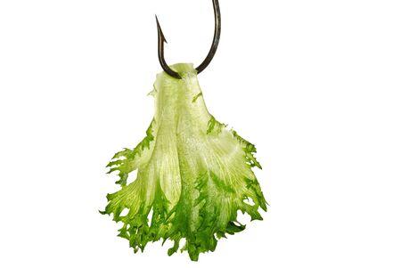 Green leaf lettuce on fishing hooks photo