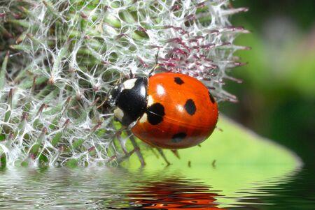 Ladybugs - circles on the water photo