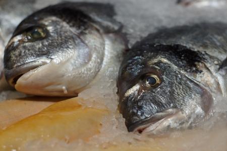 fisch eis: Frischer Fisch Eis-Dorado beliebten Mittelmeer-Fische aus alten Zeiten