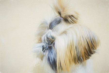Illustrations pets - wonderful dogs. Artistic drawing style will serve as a wonderful decoration of interior. Stock Photo