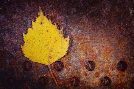Dry leaf texture: the beauty of autumn leaves. Tree leaf on a rusty metal sheet Stock Photo